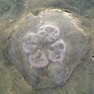 Colorful Jellyfish in Virginia Beach by Kimberly Scott
