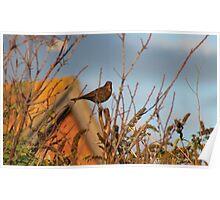sunny bird Poster