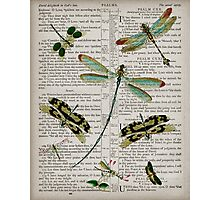Dragonflies on Psalms Photographic Print