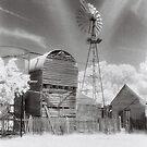 Kansas by Linda Lees