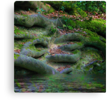 Roots in the Hundred Acre Wood Canvas Print