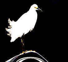 Snowy Egret by imagic