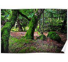 Natural Emeralds II. Wicklow. Ireland Poster