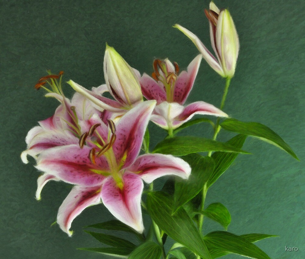 Lillies by karo