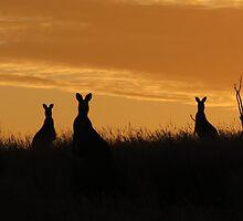 Roo Sunrise at Haddon by pixspics