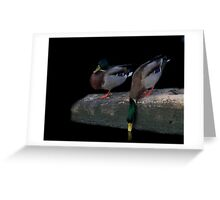 Mallard feeding Greeting Card