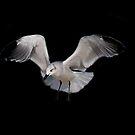 Sea Gull by William  Boyer