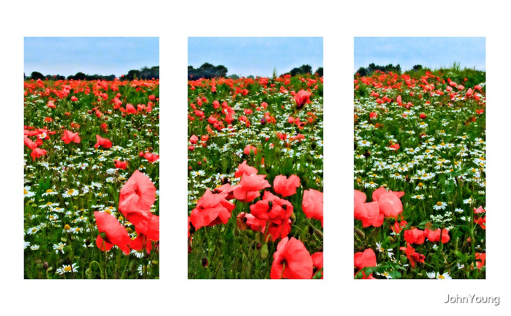Poppyland Triptych by JohnYoung