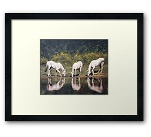 "Fine art equine painting ""Time to reflect"" Framed Print"