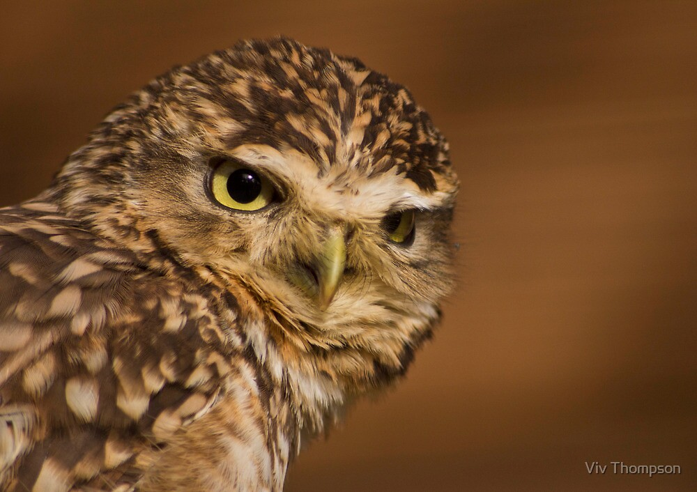 Burrowing Owl by vivsworld