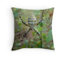 Banded Argiope Orb Weaver Spider - Argiope trifasciata Throw Pillow