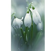 Silky Snowdrops Photographic Print