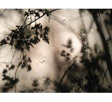 leaf silhouet Photographic Print