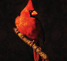 Cardinal portrait no. 9 by Rybird