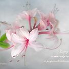 Wild Azaleas in Spring by LouiseK