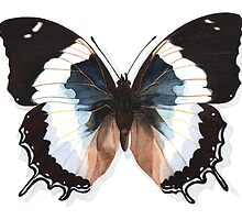 Butterfly Charaxes Species, Blue by Katy Hood