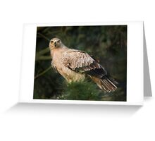 Tawny Eagle Greeting Card