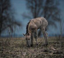 Precious Little One by Henri Ton