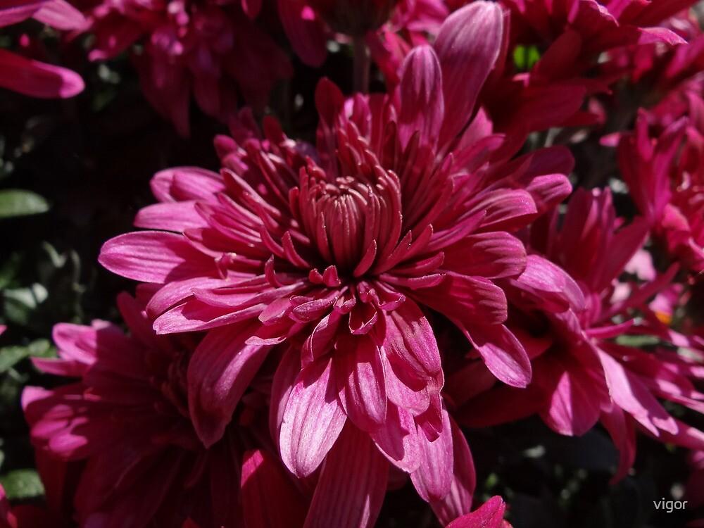 Fuscia Flowers by vigor
