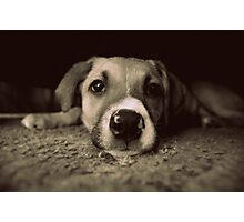 I Am Just A Puppy Photographic Print