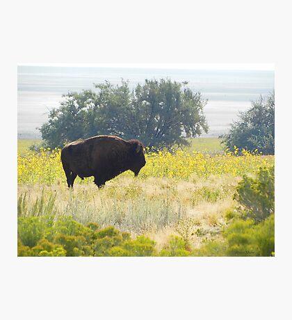 Buffalo Sunflowers Photographic Print