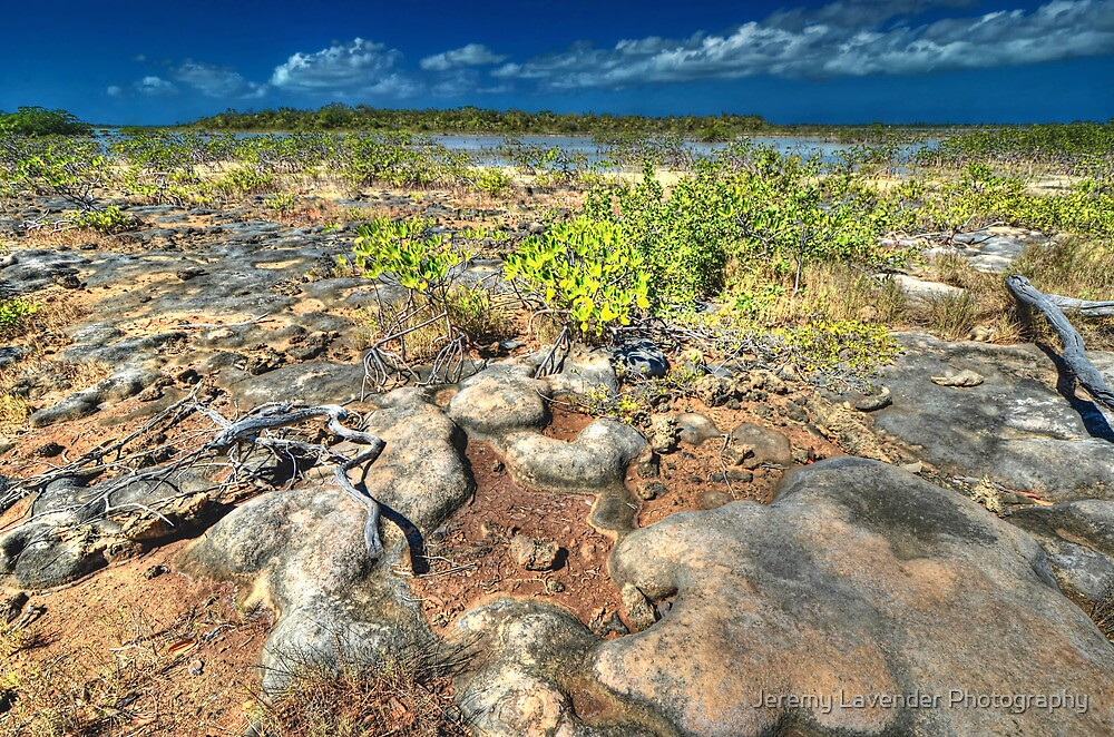 Mangroves in the South Area of Nassau, The Bahamas by Jeremy Lavender Photography