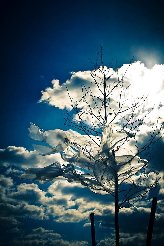 Eco Friendly  /  3 by Christopher Boscia