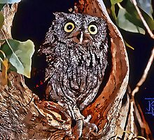 Screech Owl in Tree Home by jkgiarratano