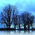 Blue Winter Trees by SkatingGirl