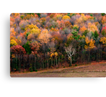 One Naked Tree Canvas Print