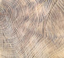 Top view of the surface of the fresh stump with annual rings by vladromensky