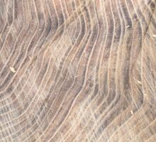 Top view of the surface of the fresh stump with annual rings Sticker
