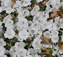White Flowers with Fall Leaves by TCbyT