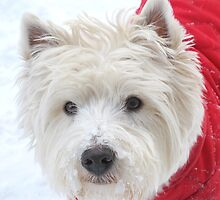 The Bestie of a Westie Year by MarianBendeth