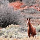 Star Horse and Red Clay by BrianAShaw