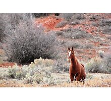 Star Horse and Red Clay Photographic Print