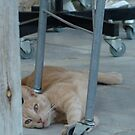 Cat resting by parvmos