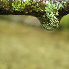 Drops with Lichens  by lindsycarranza