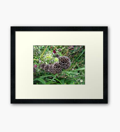 Sci-Fi seed pods Framed Print