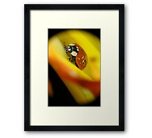 Macro of ladybird Framed Print