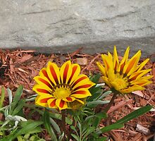 Yellow and Orange Flowers by TCbyT