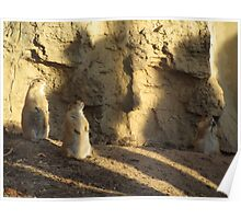 Prarie Dogs at the Zoo Poster