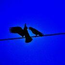 Birds on a wire by Bernie Rosser