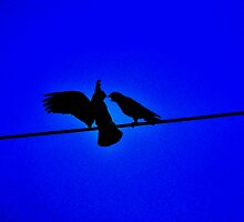 Birds on a wire by Bernie Rosser