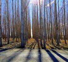 Wooden Sentry's  by trueblvr