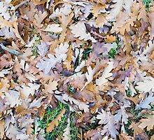 Top view of a layer of fallen oak leaves by vladromensky