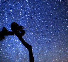 Sea of Stars Galaxy Over Joshua Tree by Gavin Heffernan