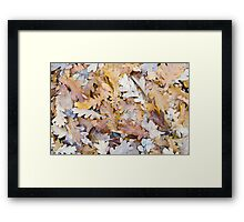 Top view of a layer of fallen oak leaves Framed Print