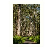 Along the Bibbulmun Track Art Print