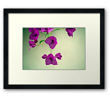 Delicate Flowers Pretty in Pink Framed Print